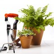 Garden tools on white background — Stockfoto