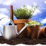Gardening tool — Stock Photo #11281019