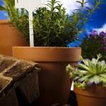 Gardening equipment with plant — Stock Photo #11281247