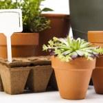Assorted gardening — Stock Photo #11282744