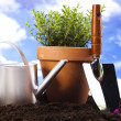 Gardening concept, work tools, plant — Stock Photo