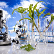 Ecology laboratory, experiment - Foto Stock