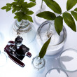 Ecology laboratory, experiment — Foto Stock