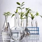 Plant laboratory — Stock Photo #11289036