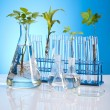 Plant laboratory — Stock Photo