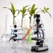 Chemical laboratory glassware equipment, ecology — Foto Stock