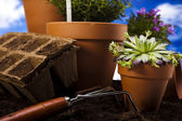 Gardening equipment with plant — Stock Photo
