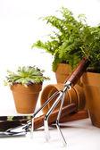 Gardening equipment with plant — Stock Photo