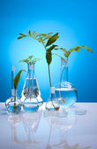 Ecology laboratory, experiment — Stok fotoğraf