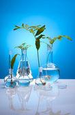 Ecology laboratory, experiment — Foto de Stock