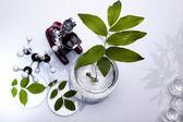 ökologie-labor, experiment — Stockfoto
