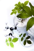 Laborglas mit pflanzen im labor — Stockfoto