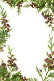 Cedar Cypress and Pine Cone Border — Stock Photo