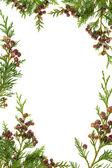 Cedar Cypress and Pine Cone Border — Stock Photo