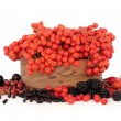 Wild Autumn Berry Fruit — Stock Photo