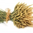 Stock Photo: Wheat Bundle
