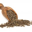 Dill Seed — Stock Photo #11835768