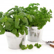 Kitchen Herbs — Stock Photo #11929644