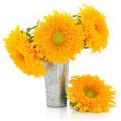 Sunflower Beauty — Stock Photo
