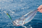 Tuna Mediterranean big game fishing — Stock Photo