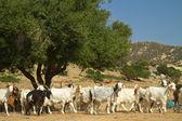 Goats on a mountain m — Stock Photo
