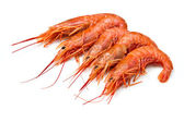 Prawns isolated on white — Stock Photo