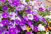 Bell flower — Stock Photo