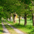 Way to an old farmhouse — Stock Photo