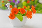 Calendula flowers and mortar — Stock Photo