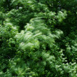 Motion blurred tree leaves - Stock Photo