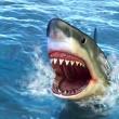 Shark attack - Stock Photo
