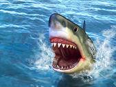 Shark attack — Stock Photo