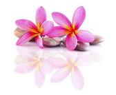 Zen steine mit frangipani — Stockfoto