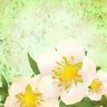 Wild roses white flowers — Stock Photo