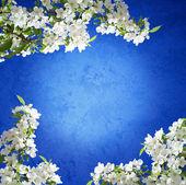 Foto de primavera de árbol de manzana floreciente — Foto de Stock