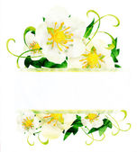 Watercolor white wild roses flowers border isoleted on white — Stock Photo