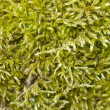 Moss in spring — Stock Photo #11897151