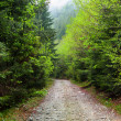 Road through forest - Stock Photo
