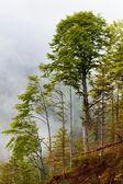 Trees in fog — Stock Photo