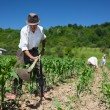 Family working the land - Foto de Stock