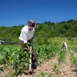 Family working the land — Stock Photo #11529280