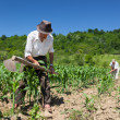 Family working the land — Stock Photo
