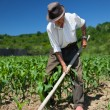 Old man weeding the corn field — Stock Photo #11529297