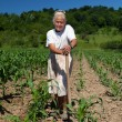 Senior rural woman in the corn field — Stock Photo