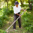 Senior farmer mowing with vintage scythe — Stock Photo #11529370
