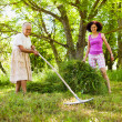 图库照片: Senior woman piling up mowed grass