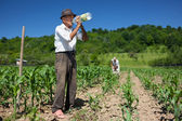 Old rural worker drinking water outdoor — Stock Photo