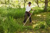 Senior farmer mowing with vintage scythe — Stock Photo