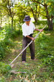 Senior farmer mowing with vintage scythe — Stock Photo
