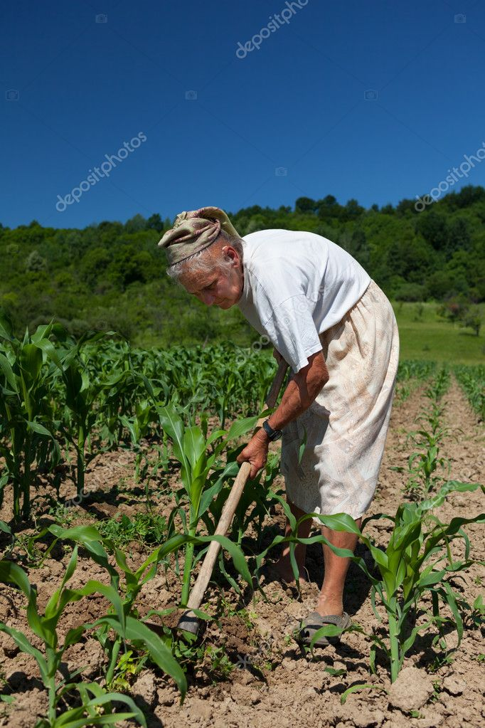 Old rural woman tiller weeding in the corn field — Stock Photo #11529306